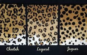 Leopard Print Runner Rug One Room Challenge Week 2 Leopard Carpet