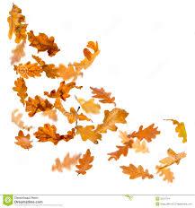 oak leaves falling stock images image 32227524 leaf art