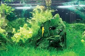 japanese aquarium renature first japanese aquarium shop in capital special reports