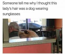 Dog Lady Meme - someone tell me why i thought this lady s hair was a dog wearing