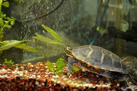 adding live plants to your indoor turtle habitat