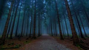 dark pine forest trees wallpaper beautiful planet pinterest