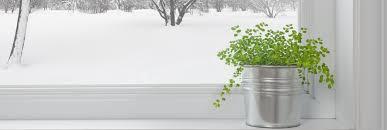 zimmerpflanzen pflegetipps für den winter zuhause bei sam