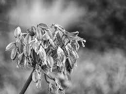black and white sunday u2013 lucid gypsy