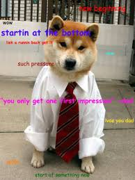 What Breed Is Doge Meme - 45 of the funniest doge memes doge meme doge and meme