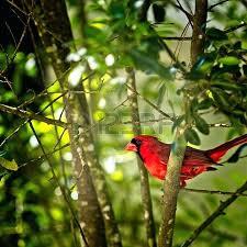 bird in a tree plant coolman