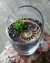 mini terrarium diy diy project
