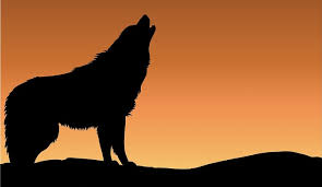 belgian shepherd howling dreams about wolves u2013 interpretation and meaning