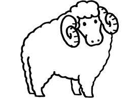 sheep curly horn coloring sheep curly horn coloring