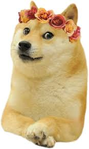 Doge Meme Tumblr - tumblr doge stickers by ohsnap redbubble