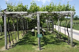 pergola trellis wine seriously