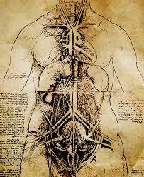 leonardo da vinci medical illustrations pinterest sketches