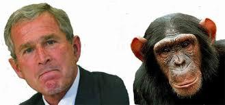 Chimp Meme - bush chimp meme series from seedsofdoubt com bush chimp chimp