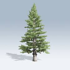 norway spruce v6 speedtree