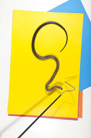 snakes aren u0027t scary if you put them on colored backgrounds wired