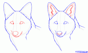 how to draw coyotes prairie wolf step by step forest animals
