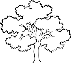 oak tree black white line art coloring book colouring svg 123 k