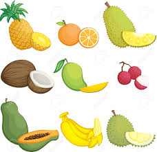 lychee fruit drawing illustration of tropical fruits icons royalty free cliparts