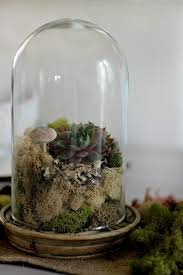 how to build a terrarium with pictures ehow