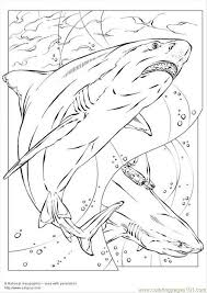 87 shark coloring pages images shark coloring