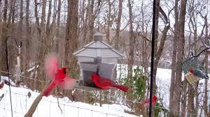 winter birds u0027 feeding frenzy cats love it youtube