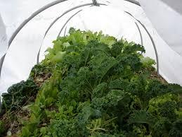 make a row cover hoop house bonnie plants