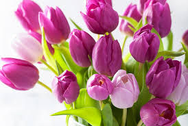real flowers how to care for tulips real simple