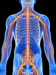understanding nerve pain palm beach gardens fl center for