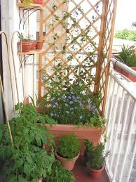 kletterpflanzen fã r balkon 594 best new balcony terrace images on garden trellis