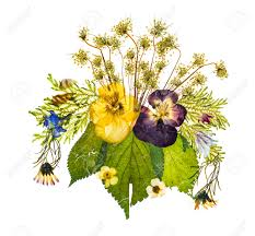 beautiful artistic arrangement of pressed dried flowers lit from
