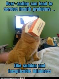 Overeating Meme - i can has cheezburger overeating animals on internets funny