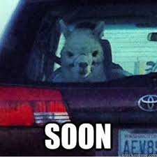 Soon Car Meme - soon memes on pinterest soon meme funny animal memes and good