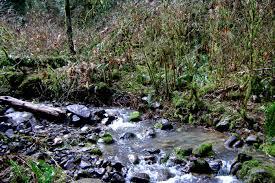 native plants for wildlife habitat and conservation landscaping habitat restoration west multnomah soil u0026 water conservation