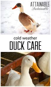 your winter duck coop keeping ducks in cold weather duck coop