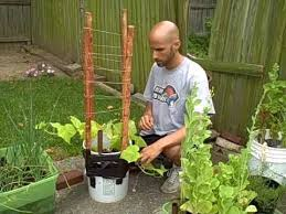 Bamboo Cucumber Trellis Livebettergarden Com How To Grow Cucumbers In Containers