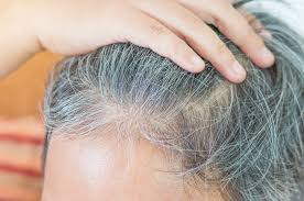 long hair that comes to a point study sheds light on regulation of hair growth across the entire