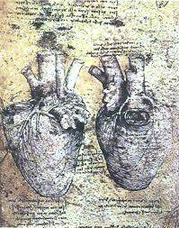 anatomical study anatomical study heart and vessels by
