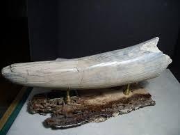 265 mammoths mastodon pre historic elephants