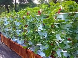 step by step hydroponics systems gardening full tutorial