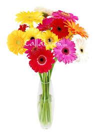 mixed colors gerbera daisies