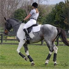 blue roan paint horse beautifulll equine soul
