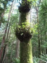 file tree plants jpg