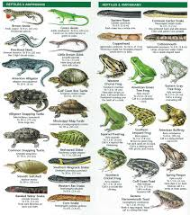 species identification u2013 woodlands conservancy