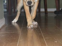 Laminate Floor Scratch Repair Best Hardwood Floor For Dogs Home Design Ideas And Pictures