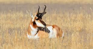 Arizona Wildlife Tours images 4 day 3 night grand teton yellowstone wildlife tour jpg