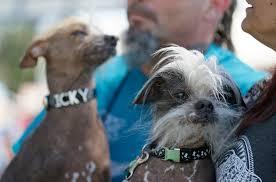 Ugliest World U0027s Ugliest Dog Contest Awards Underdogs U0027 Inner Beauty