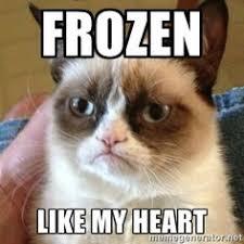 Alpaca Meme Generator - damn bro calm down geezus cat meme generator humor that i
