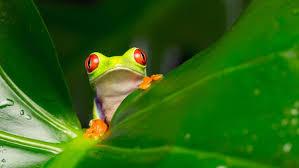 where do tree frogs live reference com