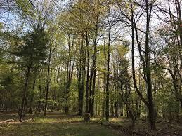 in the woods sanctuary in the woods sanctuary in the woods ny 7 hipcer