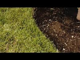 flower bed edging to allow a lawnmower plant u0026 flower care youtube
